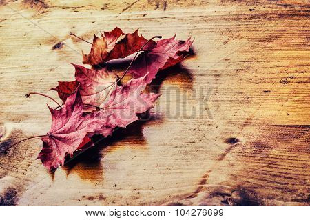 Autumn Leaves Loose On A Wooden Board. Toned Photo