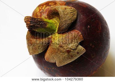 Fruit Mangostin