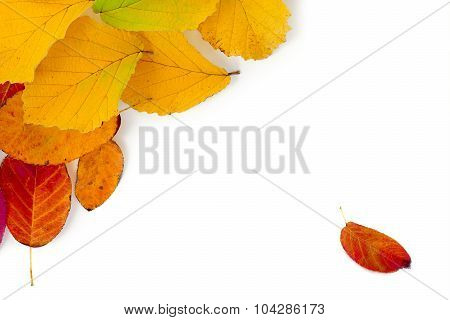 Colorful Autumn Leaves As A Corner Background Isolated On White