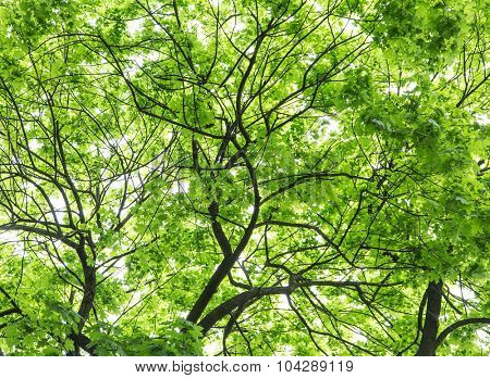 Colourful tree leaves. Close-up shot. Close-up shot. Nature background.
