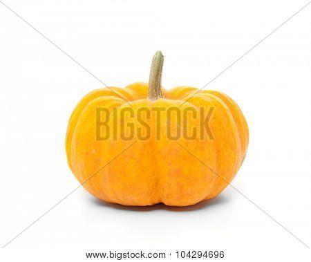 Fine grown pumpkin. All on white background