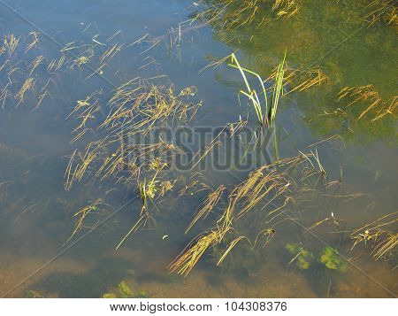 Green Water Plants
