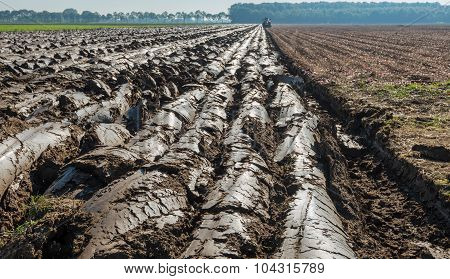 Partially Plowed Clay Soil