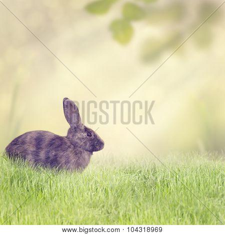 Rabbit Sitting in the Grass
