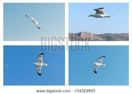 Collage Seagull