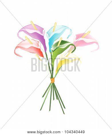 Anthurium Bouquet Or Flamingo Bouquet On White