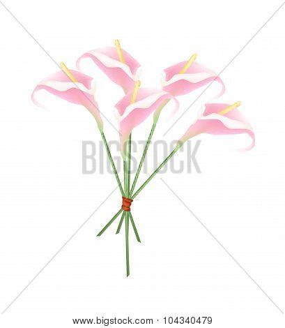 Beautiful Pink Anthurium Bouquet Or Flamingo Bouquet
