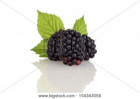 three blackberries with leaves