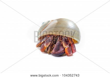 Hermit Crab 9