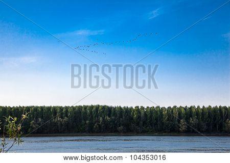 Migratory birds fly south above the Danube River in Novi Sad, Serbia.