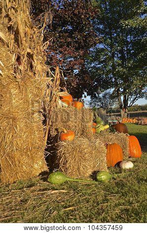 Corn stalks, bales of straw, and pumpkins
