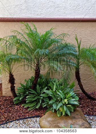 Small Palm Trees in Rock Garden