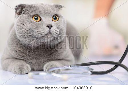 Positive vet examining a cat