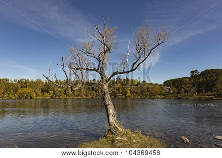 Lone tree against a river