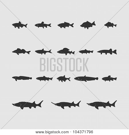 set of freshwater fish new drawing
