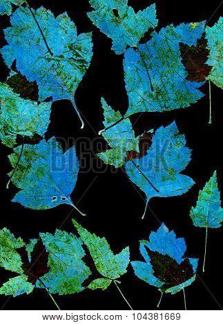 Set of autumn leaves isolated on black background