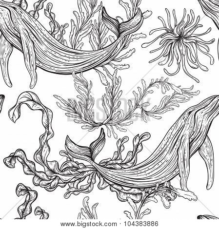 Seamless pattern with whale, marine plants and seaweeds.Vintage set of black and white hand drawn ma