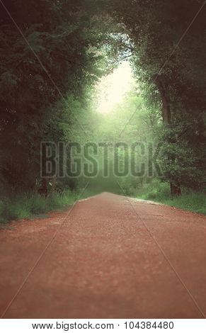 Magic Dense Forest And Road With Light At The End Tunnel, Summer Nature Photo