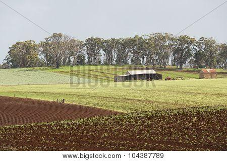 Table Cape Farmland