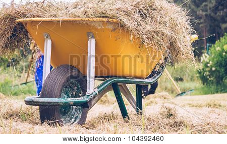 Wheelbarrow with dry hay in the field