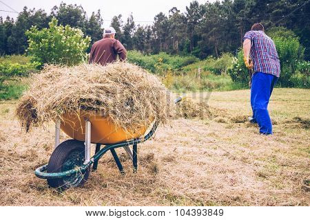 Wheelbarrow with hay and men working on field