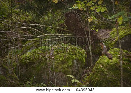 Squirrel sitting on a rock in the autumn Monrepos park