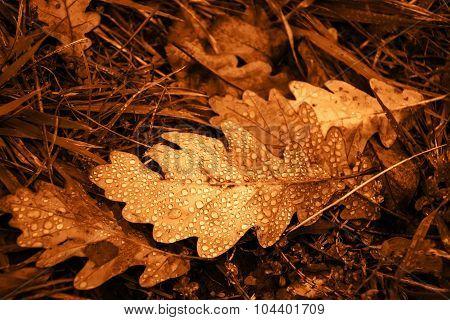 Oak Leaf With Dew Drops. Vintage Golden Effect.