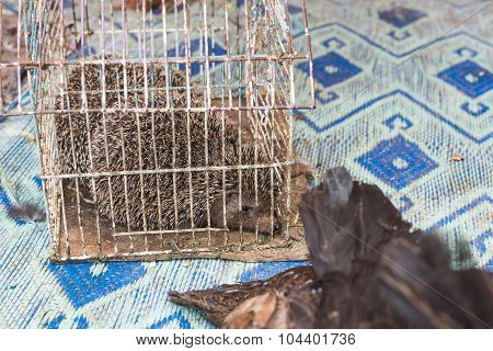 The Porcupine In The Cage Wait For Sell In The Market
