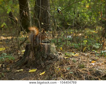 Forest Animals: Squirrel And Bird