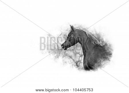 Arabian horse on a background of trees dissolves in white background
