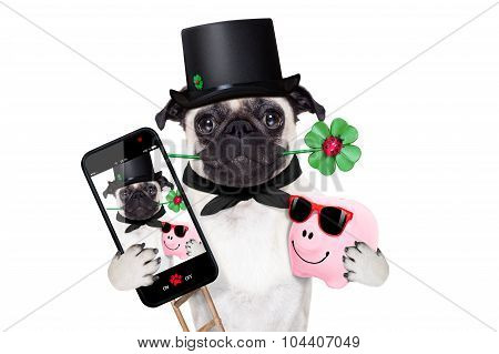 New Years Eve Dog Selfie