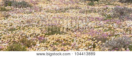 Sea Of White, Brown And Purple Wild Flowers