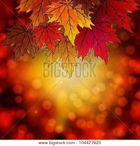 Autumn Leaves On An Autumn Background Bokeh