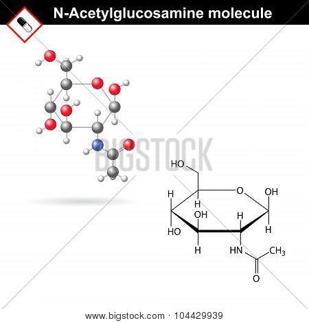 N-acetylglucosamine Molecule