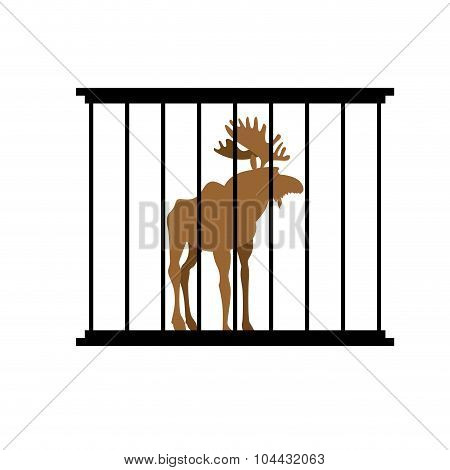 Deer In A Cage. Animal In Zoo Behind Bars. Elk With Large Horns In Captivity. Wild Animal Captive Pe