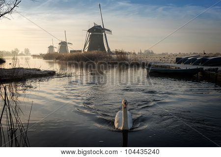 Swan Swimming In A Stream In A Winter Landscape