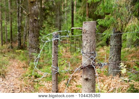 Barbed Wire In Forest