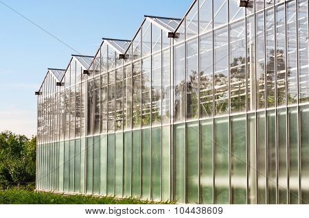 Greenhouses For Growing Vegetables