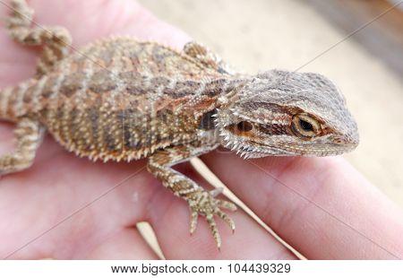 Lizard In Hand