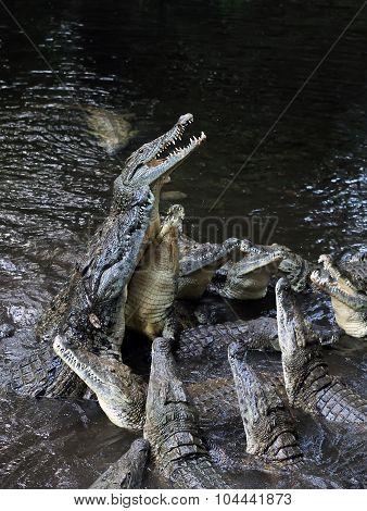 Group Crocodile