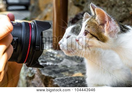 Photographing two cats