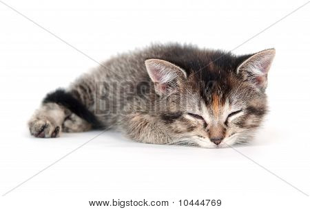 Cute Tabby Kitten Sleeping