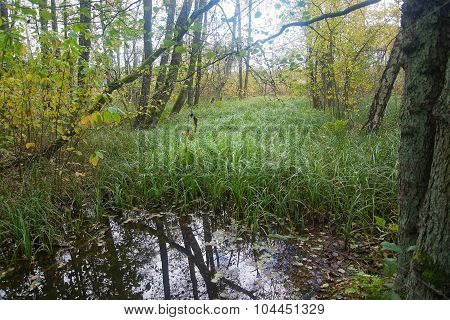 Forest Foliage And Marsh