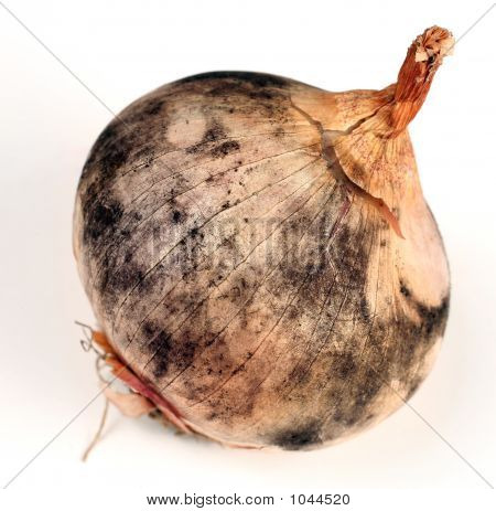 Diseased Onion