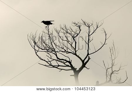 Silhouette Bird Crow On A Dry Tree Without Leaves. Sepia