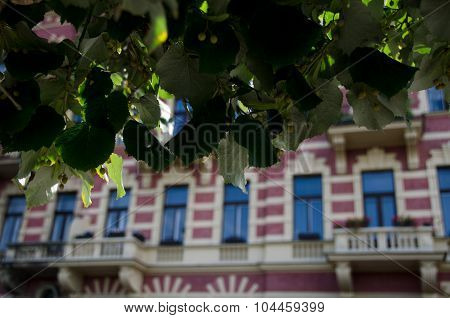 Summer Shadows Over Pink Building On Siroka Street