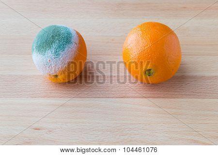 Moldy Rotten Orange Fruit Near Fresh Orange