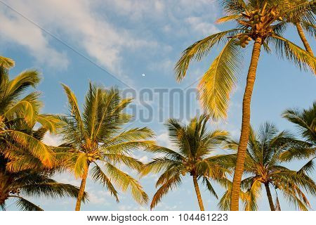 Palm Trees On Tropical Coast At Sunset