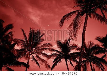 Palm Trees On Tropical Coast At Sunset, Toned Photo.