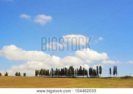 Tuscany, Cypress Trees On A Hill Rural Chianti Landscape, Italy.